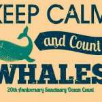 600 Volunteers Count Whales in 20th Anniversary Event
