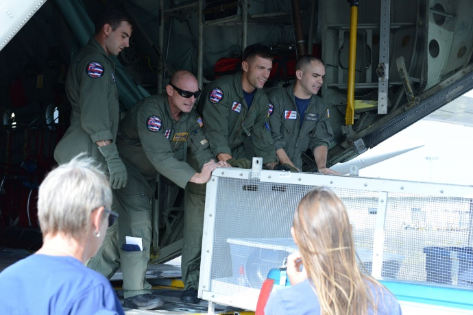 Crew members from Coast Guard Air Station Barbers Point assist with offloading crates for two female Hawaiian Monk Seal off of an HC-130 Hercules airplane in Kona, Hawaii, March 18, 2015. Coast Guard crew members, National Oceanic and Atmospheric Administration, U.S. Fish and Wildlife Service and the Department of Land and Natural Resources partnered together to transport two rehabilitated Hawaiian Monk Seals to Midway Atoll where they would be transferred via ship to Kure Atoll State Wildlife Sanctuary. (U.S. Coast Guard photo by Petty Officer 2nd Class Tara Molle)