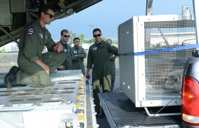 Crew members from Coast Guard Air Station Barbers Point, prepare to load two female Hawaiian Monk Seals onto an HC-130 Hercules airplane at Kona, Hawaii, March 18, 2015. Coast Guard crew members, National Oceanic and Atmospheric Administration, U.S. Fish and Wildlife Service and the Department of Land and Natural Resources partnered together to transport two rehabilitated Hawaiian Monk Seals to Midway Atoll where they would be transferred via ship to Kure Atoll State Wildlife Sanctuary. (U.S. Coast Guard photo by Petty Officer 2nd Class Tara Molle)