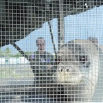 Endangered Hawaiian Monk Seals Returned to NW Hawaiian Islands