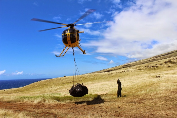 Helicopter transporting outplanting supplies into Nakula Natural Area Reserve_Nakula Natural Area Reserve, Maui_Kirsten Gallaher