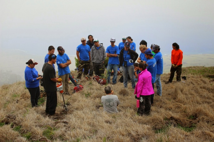 Kupu Hawai'i Youth Conservation Corps volunteers learning how to outplant trees at_Nakula Natural Area Reserve, Maui. Photo by Kirsten Gallaher.