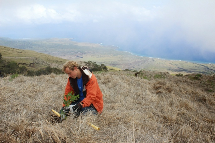 Kupu Hawai'i Youth Conservation Corps volunteer Gus Robertson outplanting a seedling at Nakula Natural Area Reserve, Maui. Photo by Kirsten Gallaher