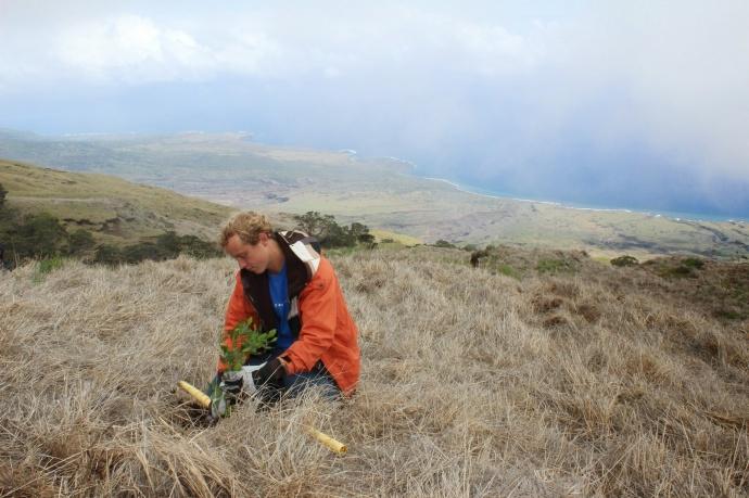 Kupu Hawai'i Youth Conservation Corps volunteer Gus Robertson outplanting a seedling at Nakula Natural Area Reserve, Maui. Photo by Kirsten Gallaher