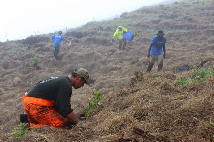 Division of Forestry and Wildlife staff and volunteers outplanting trees at Natural Area Reserve, Maui. Photos by Kirsten Gallaher.