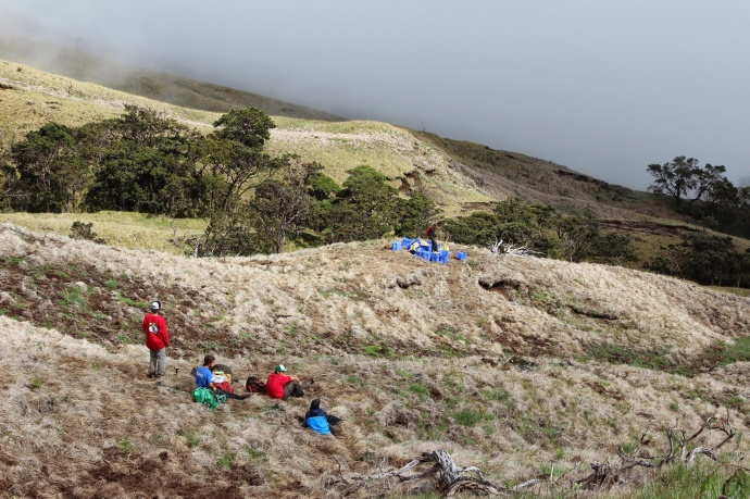 Kupu Hawai'i Youth Conservation Corps volunteers taking a break from outplanting at Nakula Natural Area Reserve, Maui. Photo by Kirsten Gallaher.
