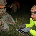 Nighttime Banding of Wedge-tailed Shearwaters