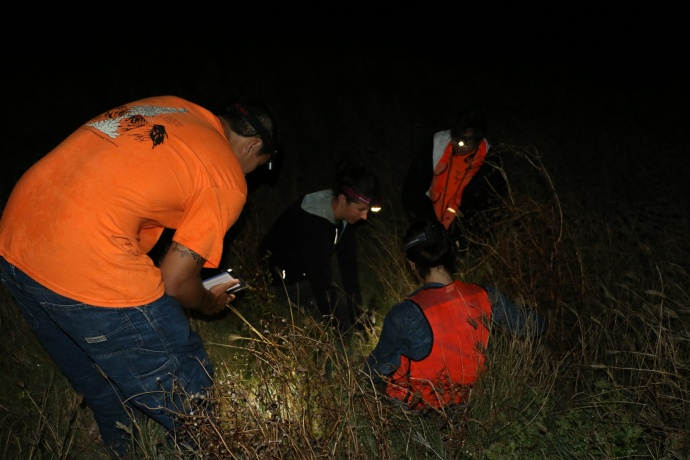 Nighttime Banding of Wedge-tailed Shearwaters. Photo courtesy DLNR.