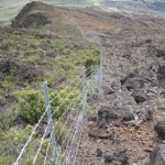 Public Scoping Begins for Conservation Work at Nu'u