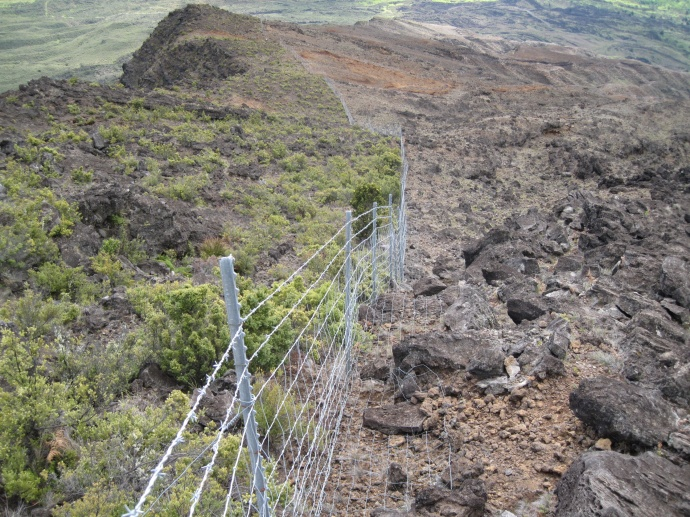 Existing park boundary fence along the upper elevations near Nu'u and Kaupo Gap. Left side shows habitat recovery.  Right side shows areas impacted by feral animals. Photo credit: Haleakala NP, C. Fukushima.