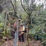 New Waikamoi Fence Protects East Maui Watershed