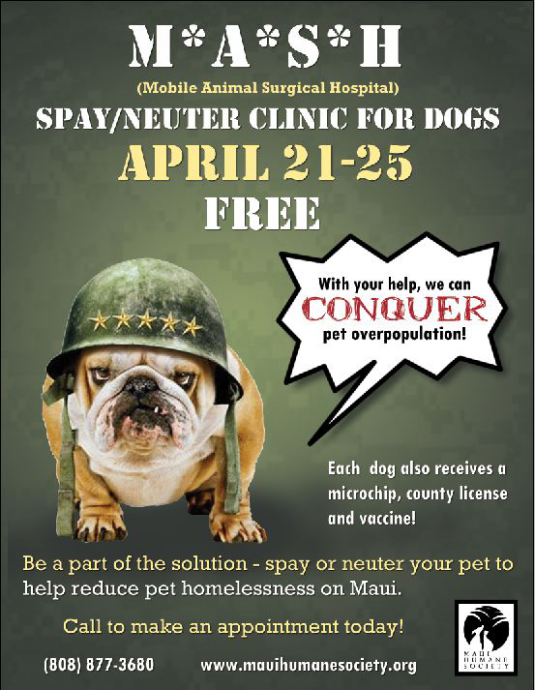 mash spay neuter clinic dog