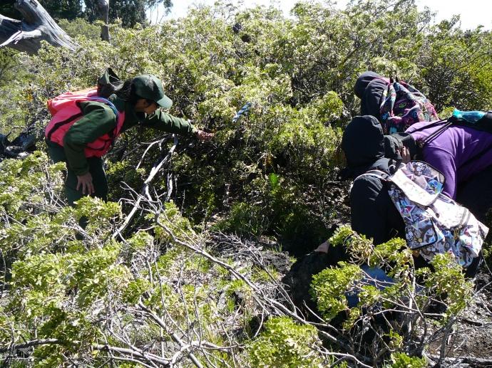 Teachers view a no-longer-used nēnē nest during a training workshop.  Photo courtesy Haleakalā National Park.