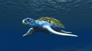 honu turtle