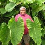 Kalo Workshop at Maui Nui Botanical Gardens on Saturday