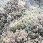 Downed Tree on Keʻanae Ridge Knocks out Power in East Maui