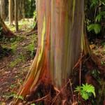 A Tropical Paradise: East Maui's Botanical Gardens
