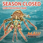 REMINDER: Season Closed on Lobster and Kona Crab