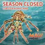 REMINDER: Season Closed on Lobster and Kona Crab