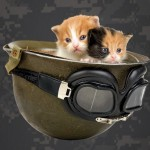 Free Cat Spay Neuter Clinics Offered to Reduce Pet Overpopulation