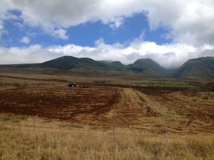 Plant Against Monsanto. Photo credit: Rise Up Maui.