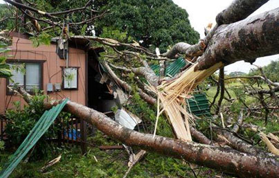 Tropical Storm Iselle wind damage. Photo courtesy NOAA/NWS.
