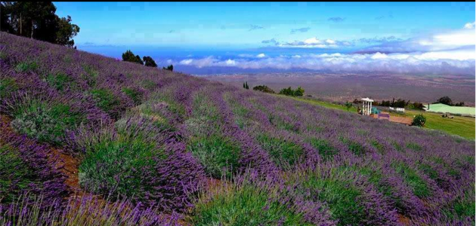 Amazing Upcountry Maui Farm Tours