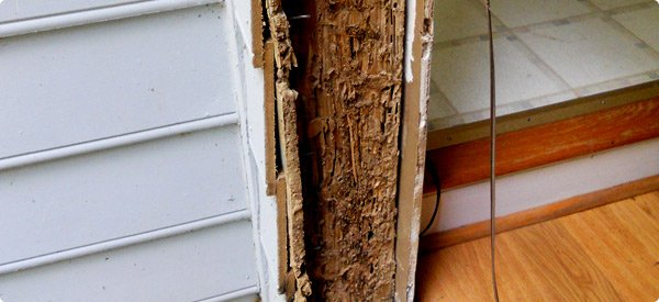 Termite damage. Google image.