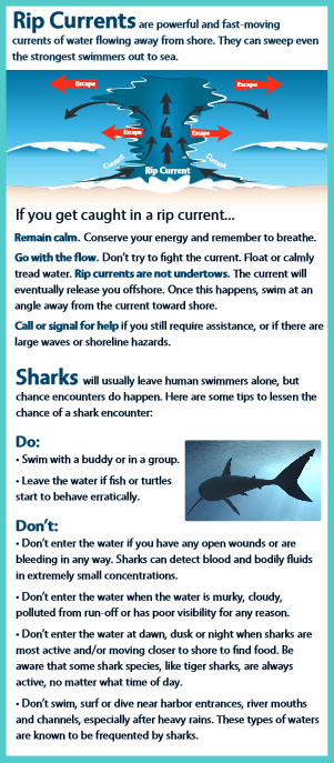 Brochure: Section on Rip Currents.
