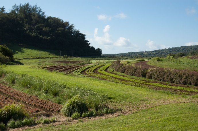 Farm at Hana Ranch