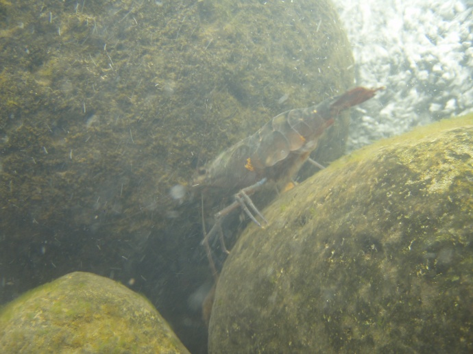 Maui stream research. Photo credit: DLNR.