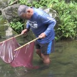 VIDEO: Maui Stream Research Traces the Life and Movement of Tiny Creatures