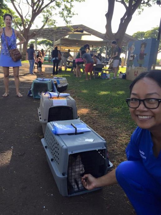 Maui Humane Society, M*A*S*H Clinic. Animal balance lineup.