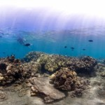 Scientists Launch Mission to Reveal Condition of Hawaiʻi's Reefs