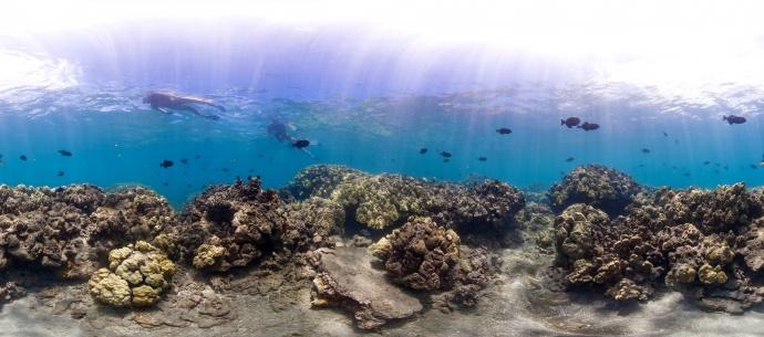 Hanauma Bay Hawaiʻi 2012. Photo credit: XL Catlin Seaview Survey