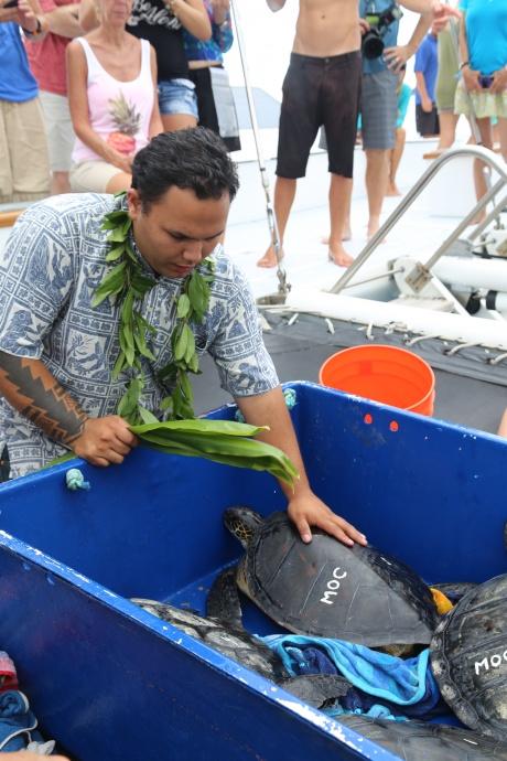Turtle release 2015. Photo credit: Maui Ocean Center.