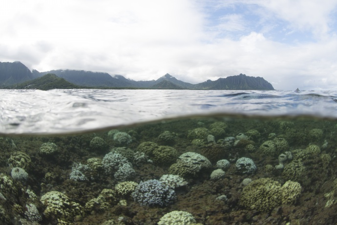 Photo credit: XL Catlin Seaview Survey