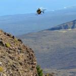 Haleakalā National Parkto Begin Pine Control Project