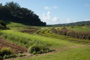 Hāna Ranch landscape. Photo courtesy of Hāna Ranch.