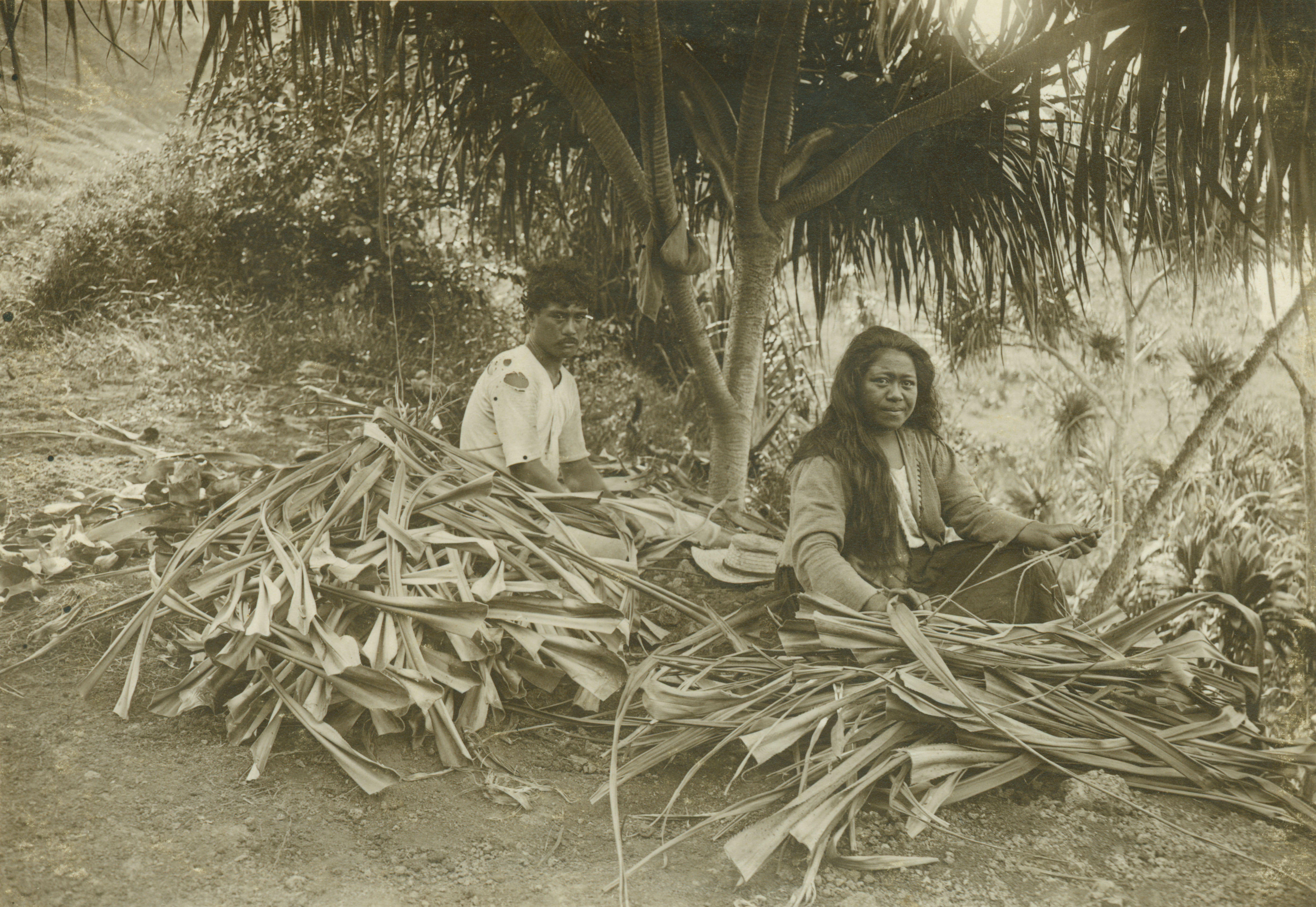 Mary Paakiki Kanei and her husband Kaumealani Kanei preparing hala for weaving;Lumaha'i Kaua'i,ca.1920,courtesy of Bishop Museum