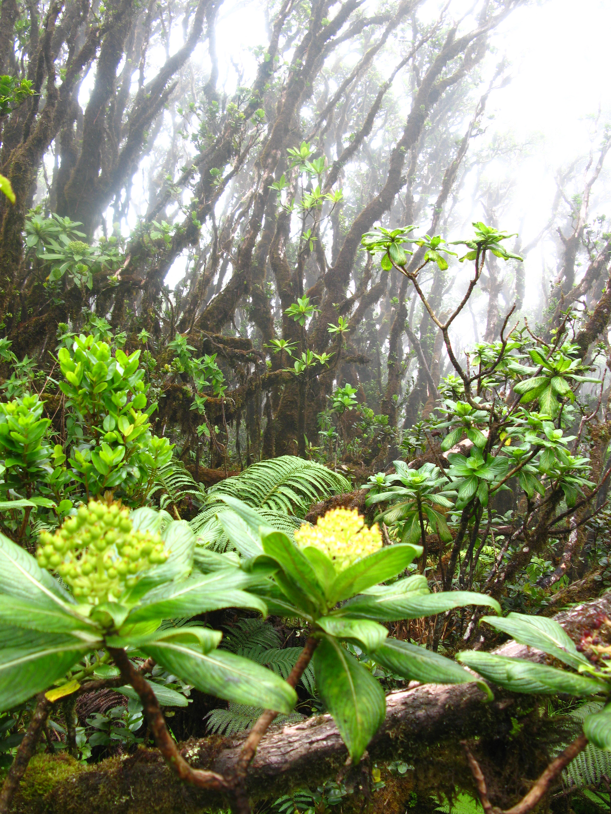 Maui Grant Funding Available