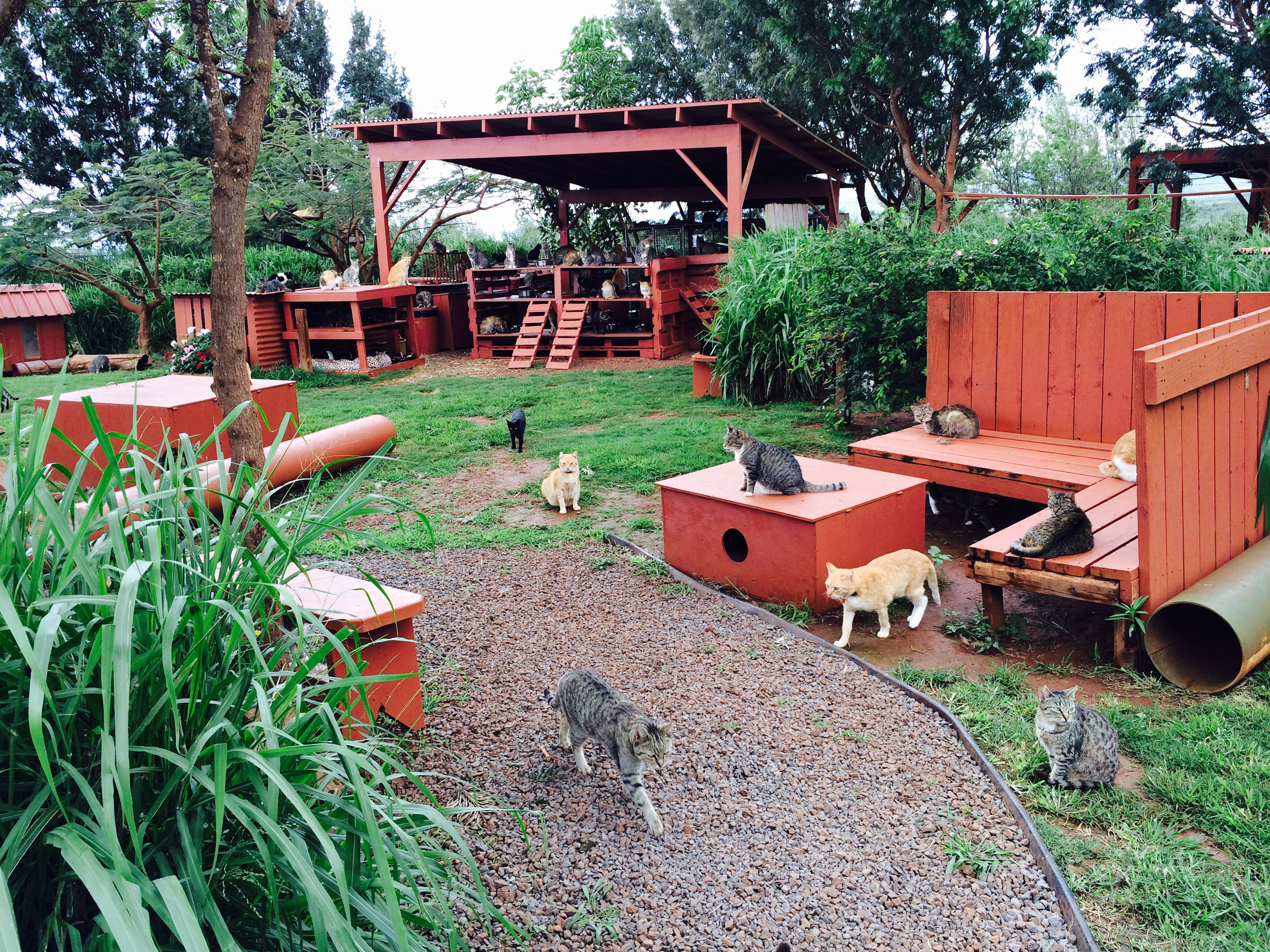 The Lāna'i Cat Sanctuary. Photo credit: Lāna'i Cat Sanctuary.