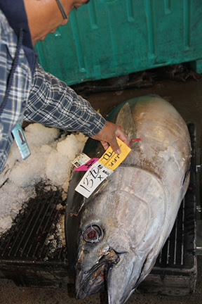 With limited supply during the closure, prices for bigeye tuna (`ahi) skyrocketed at the Honolulu fish auction. At $13.70 a pound, this 214-pounder was worth nearly $3,000 off the boat. Photo credit: Western Pacific Regional Fishery Management Council.