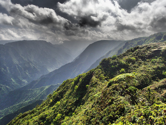 The slopes on which the chicks currently reside. Photo credit: Andre Raine/Kaua'i Endangered Seabird Recovery Project