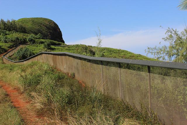 Predator proof fence at Kilauea Point National Wildlife Refuge. Photo credit: Ann Bell/USFWS.