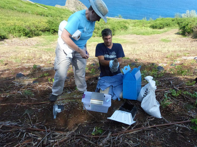 Getting ready to weigh a Hawaiian petrel chick. Photo credit: George Wallace/American Bird Conservancy.