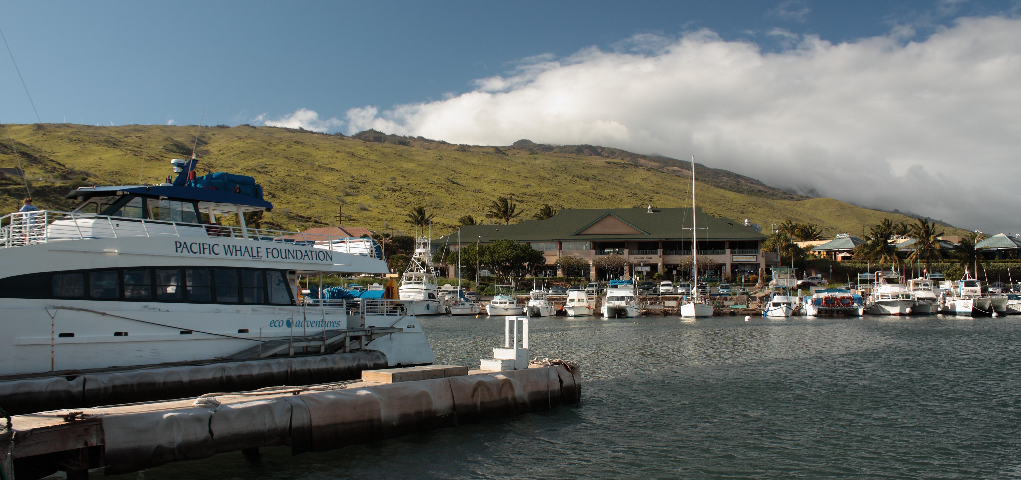 Photo source: wikimedia.org/wikipedia/commons/3/3f/Pacific_Whale_Foundation_Maalaea_Harbor.