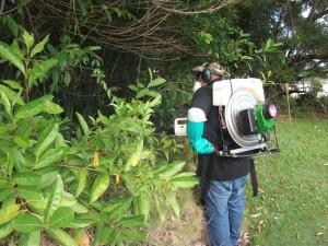 Dengue vector control. Photo credit: Hawaiʻi District Health Office.