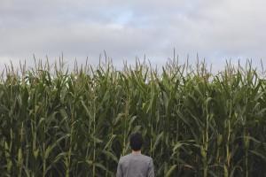 Corn image by Jake Melara, http://magdeleine.co.