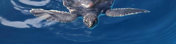turtle 5 2015